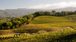 Benziger Winery Tour Sweepstakes